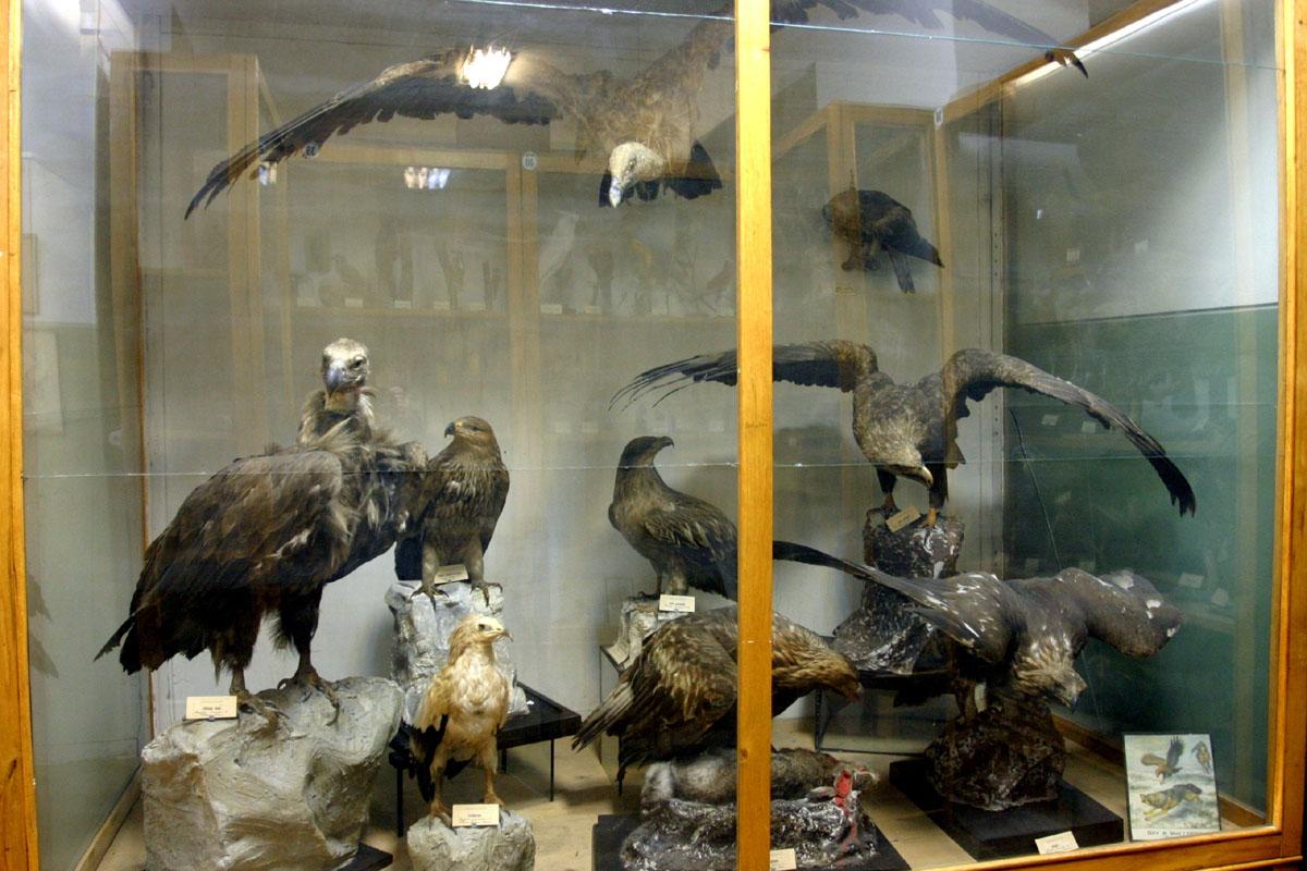 москве график работы в зоологического музея