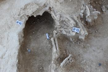 Верхнепалеолитические находки
